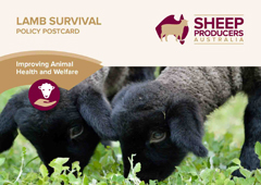 SPA Postcard 04_Lamb Survival_FA_no bleed-1